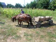 Повозка с лошадьми